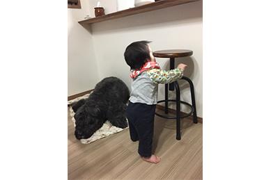 赤ん坊とディルの共存風景