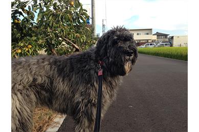 柿畑と稲田の道を散歩するある日のディル