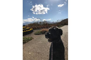 富士を背景にしたディル